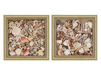 seashells in shadow box