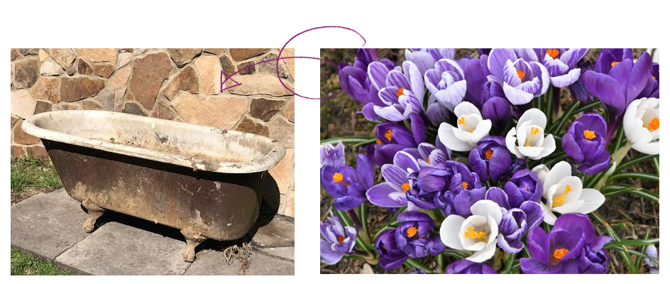 old cast iron tub with purple flowers beside it